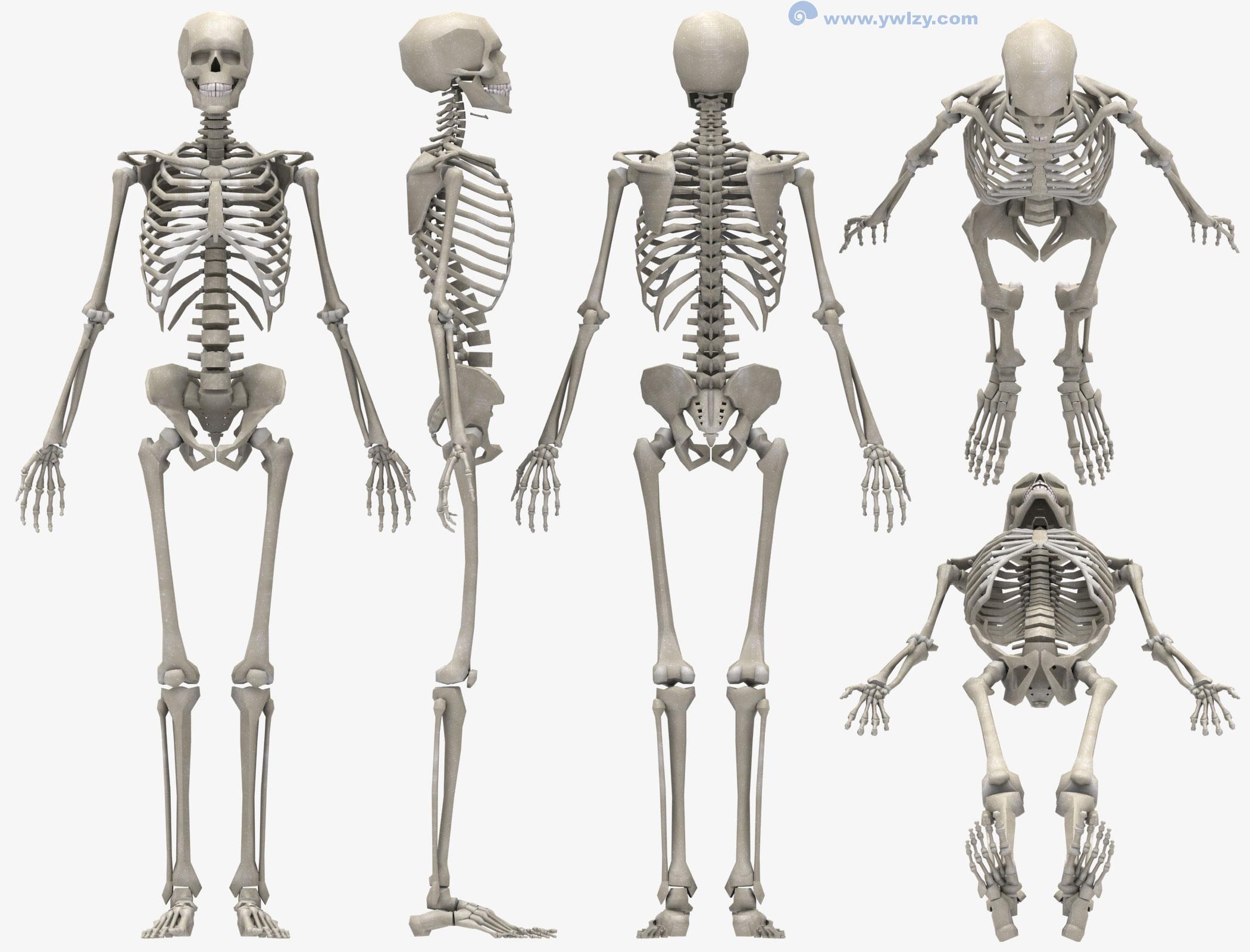 婴儿骨骼手绘