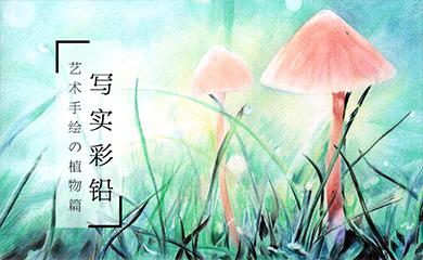 写实彩铅-植物篇
