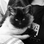 爱上猫的胖妹纸