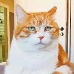 糖糖cici